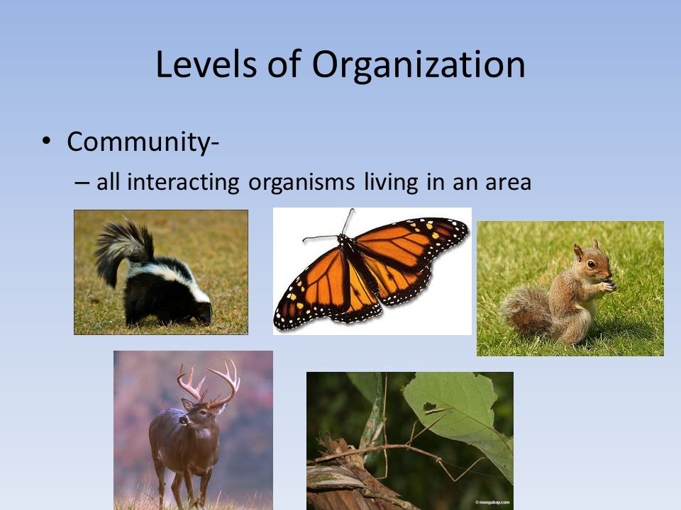 Levels of Organization Population- – members of a species that live in one place at a time