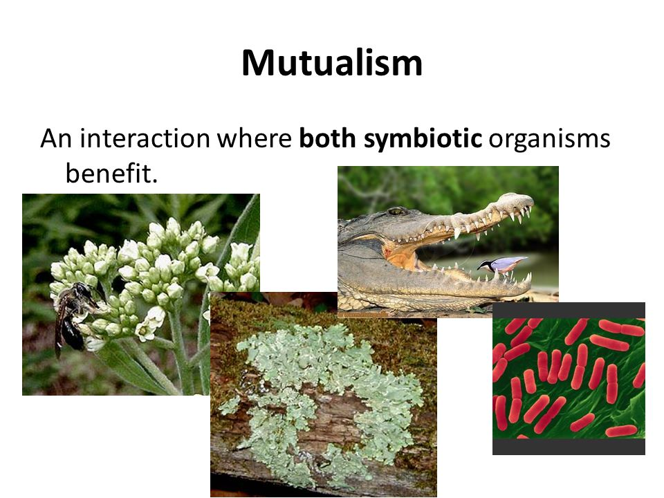 Mutualism An interaction where both symbiotic organisms benefit.