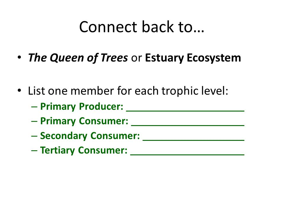 Connect back to… The Queen of Trees or Estuary Ecosystem List one member for each trophic level: – Primary Producer: – Primary Consumer: – Secondary Consumer: – Tertiary Consumer: