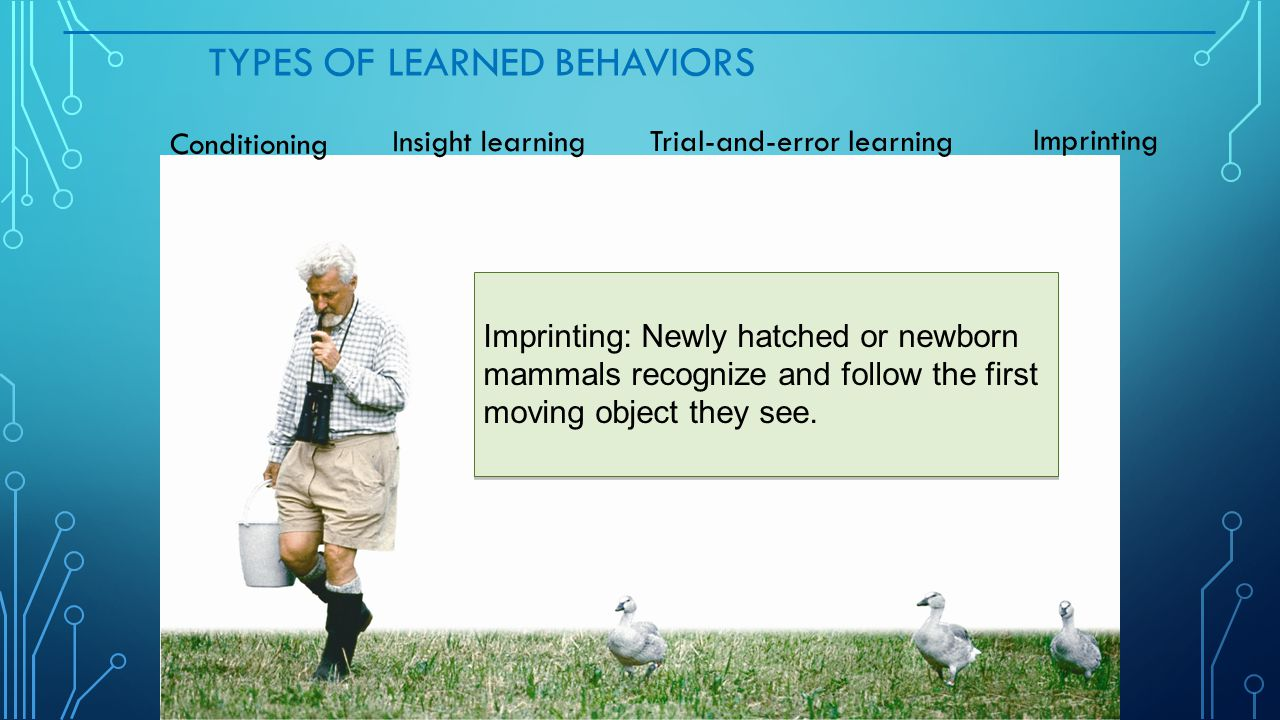 TYPES OF LEARNED BEHAVIORS Imprinting: Newly hatched or newborn mammals recognize and follow the first moving object they see. Conditioning Trial-and-
