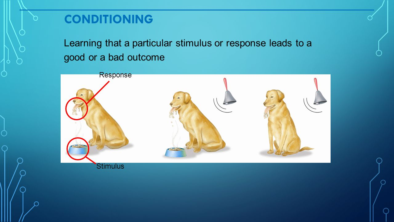 CONDITIONING Learning that a particular stimulus or response leads to a good or a bad outcome Response Stimulus