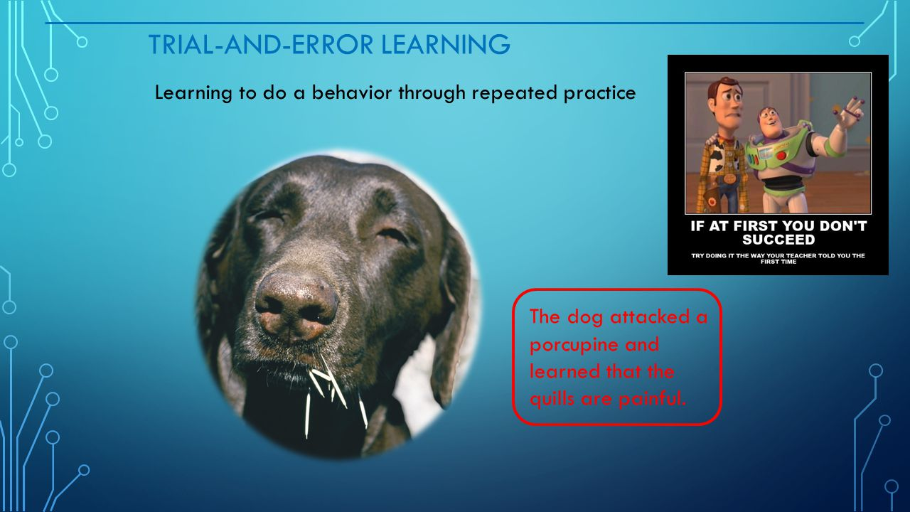 TRIAL-AND-ERROR LEARNING Learning to do a behavior through repeated practice The dog attacked a porcupine and learned that the quills are painful.