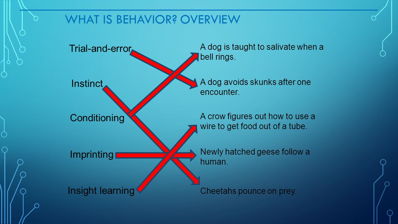 WHAT IS BEHAVIOR? OVERVIEW Trial-and-error Instinct Conditioning Imprinting Insight learning A dog is taught to salivate when a bell rings. A dog avoi