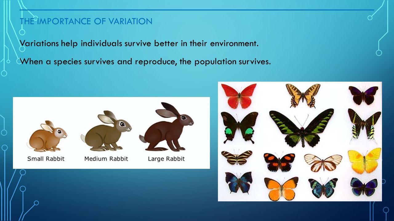 WHAT IS BEHAVIOR EXPLAIN WHAT CAUSES ANIMAL BEHAVIOR.
