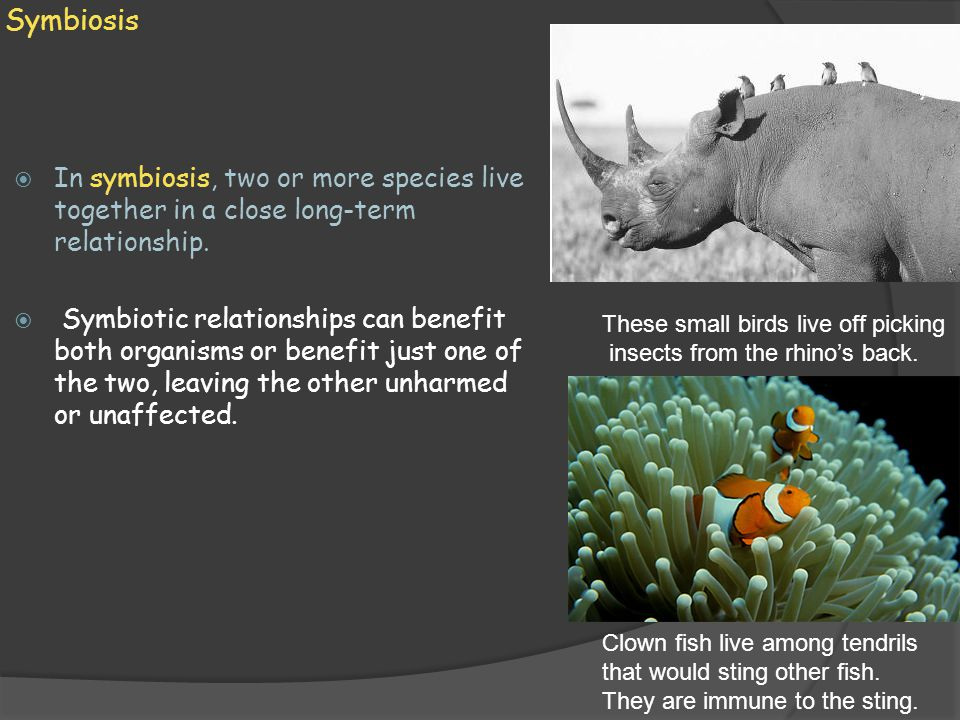 Symbiosis  In symbiosis, two or more species live together in a close long-term relationship.  Symbiotic relationships can benefit both organisms or