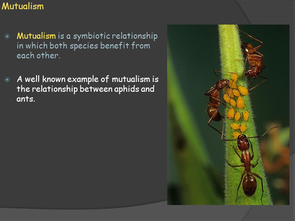 Mutualism  Mutualism is a symbiotic relationship in which both species benefit from each other.  A well known example of mutualism is the relationsh