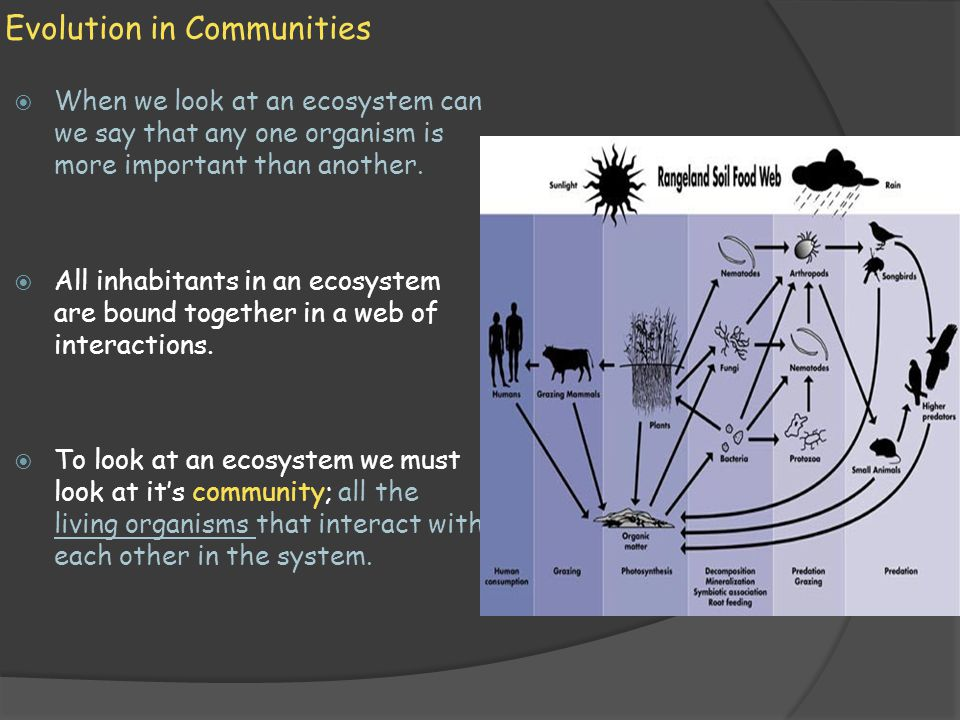 Interactions Among Species  I nteractions among species are a result of a long period of evolutionary adjustment to other species in their community.