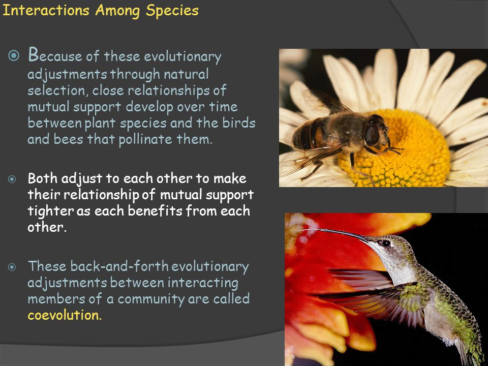 Predator and Prey Coevolution  P redation is the act of one organism killing another for food.