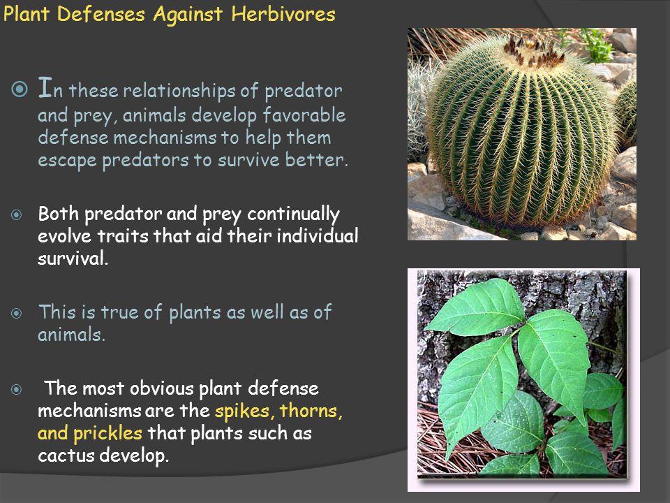 Plant Defenses Against Herbivores  P lants also develop chemical compounds that discourage consumption by herbivores.