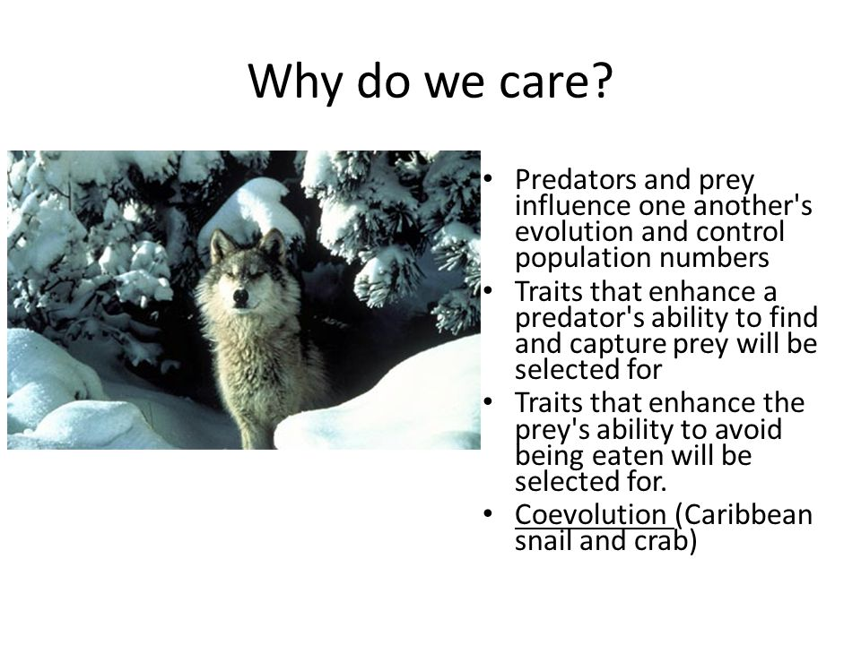 Why do we care.