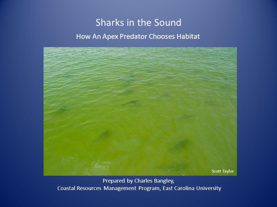 Sharks in the Sound How An Apex Predator Chooses Habitat Prepared by Charles Bangley, Coastal Resources Management Program, East Carolina University S