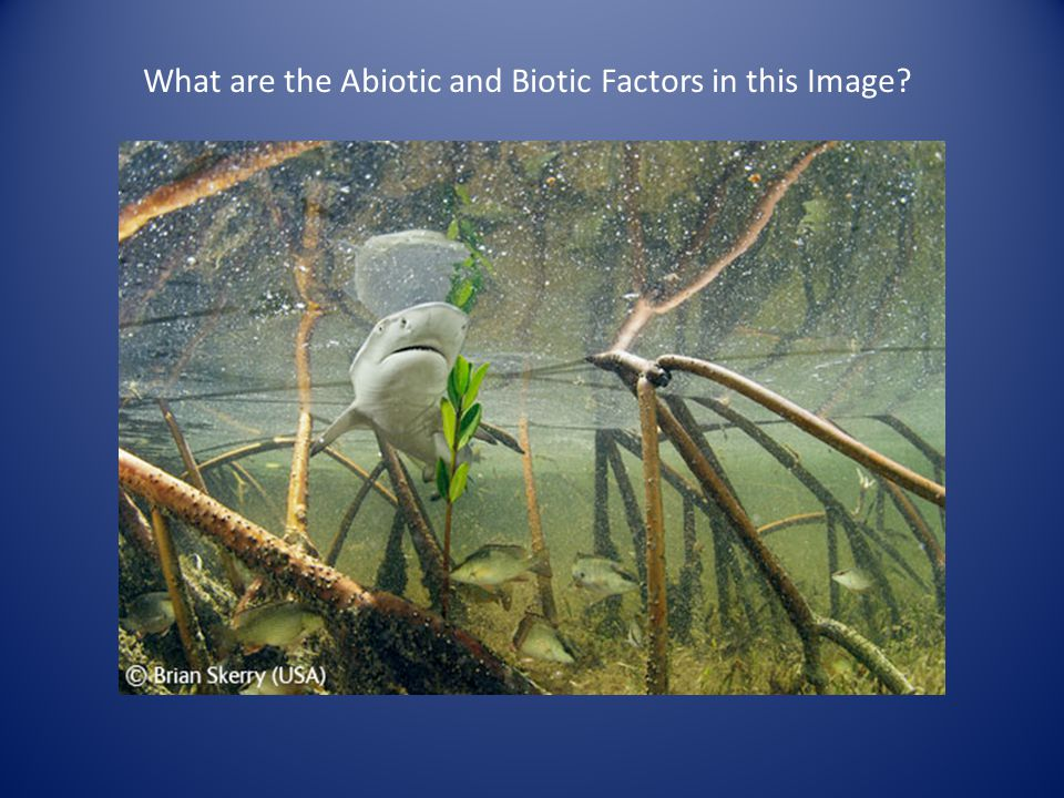 What are the Abiotic and Biotic Factors in this Image