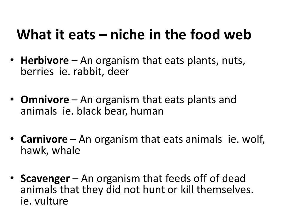 What it eats – niche in the food web Herbivore – An organism that eats plants, nuts, berries ie. rabbit, deer Omnivore – An organism that eats plants