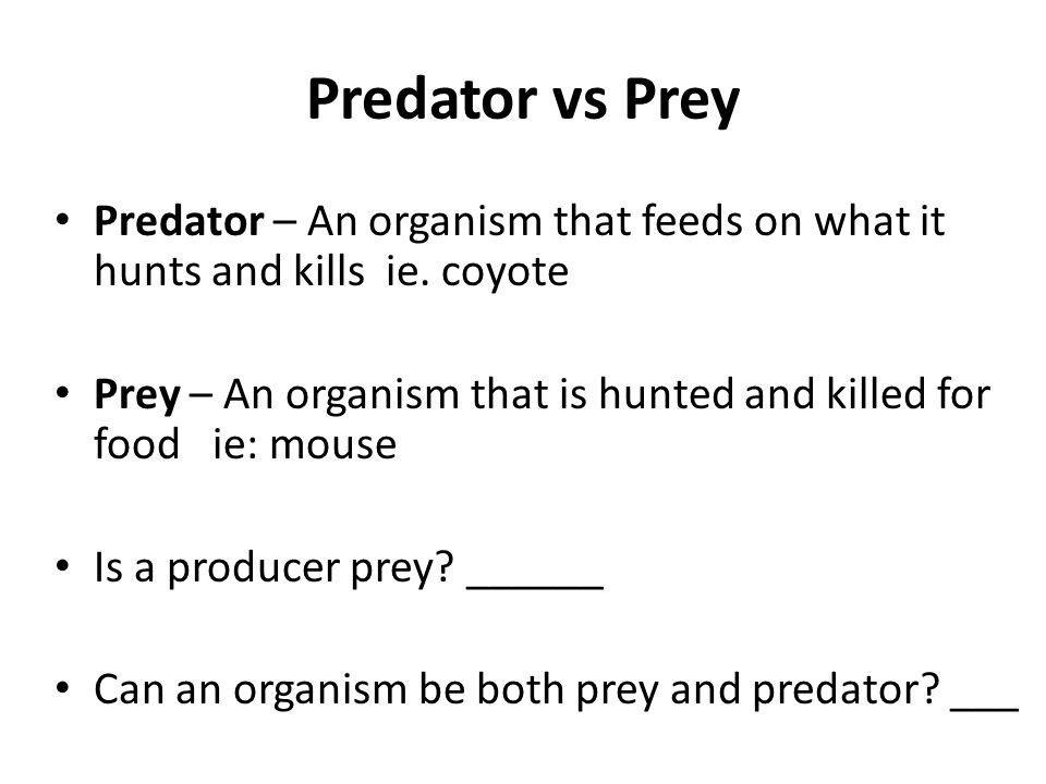 Predator vs Prey Predator – An organism that feeds on what it hunts and kills ie. coyote Prey – An organism that is hunted and killed for food ie: mou