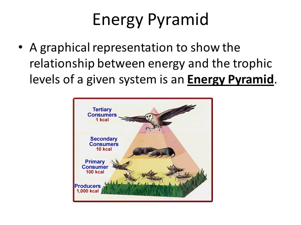 Energy Pyramid A graphical representation to show the relationship between energy and the trophic levels of a given system is an Energy Pyramid.