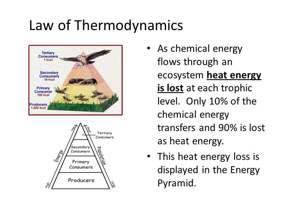 Law of Thermodynamics As chemical energy flows through an ecosystem heat energy is lost at each trophic level. Only 10% of the chemical energy transfe