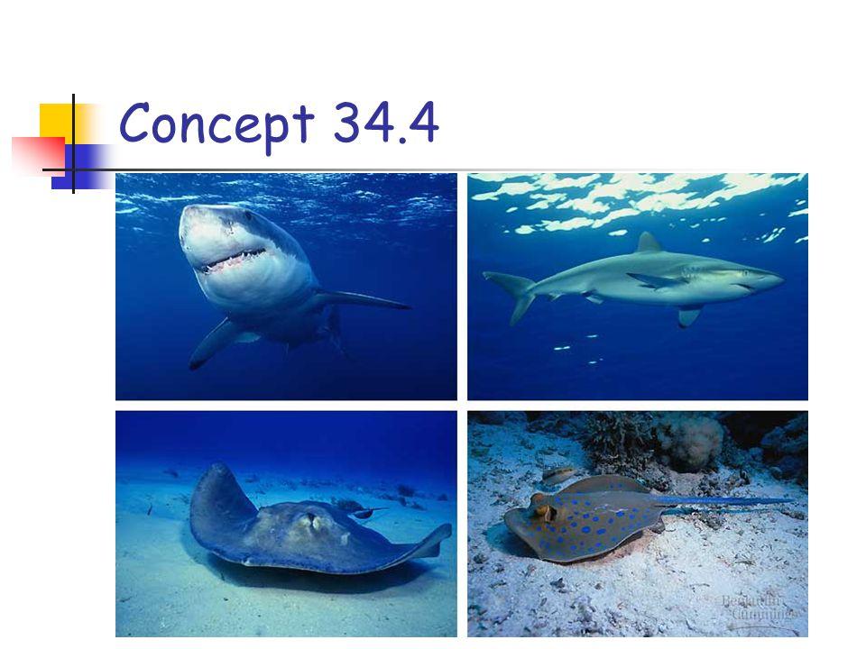 Concept 34.4