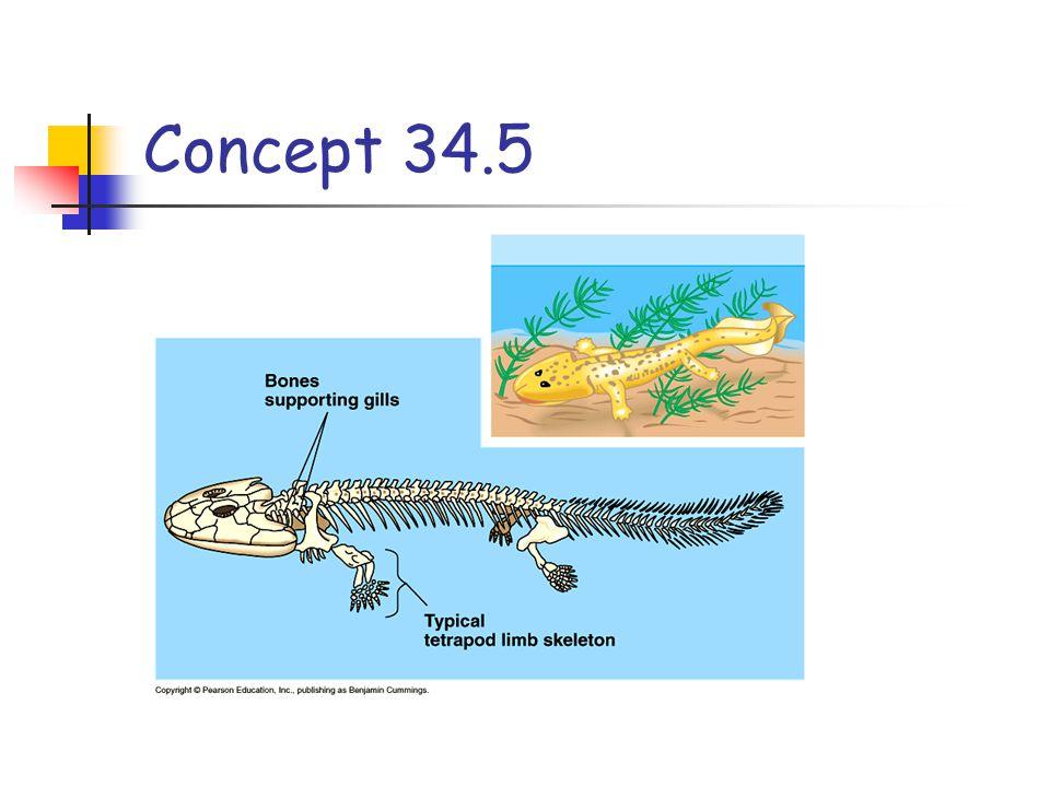 Concept 34.5