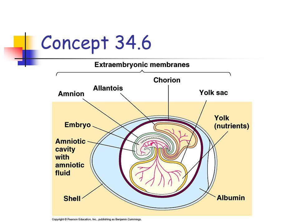 Concept 34.6