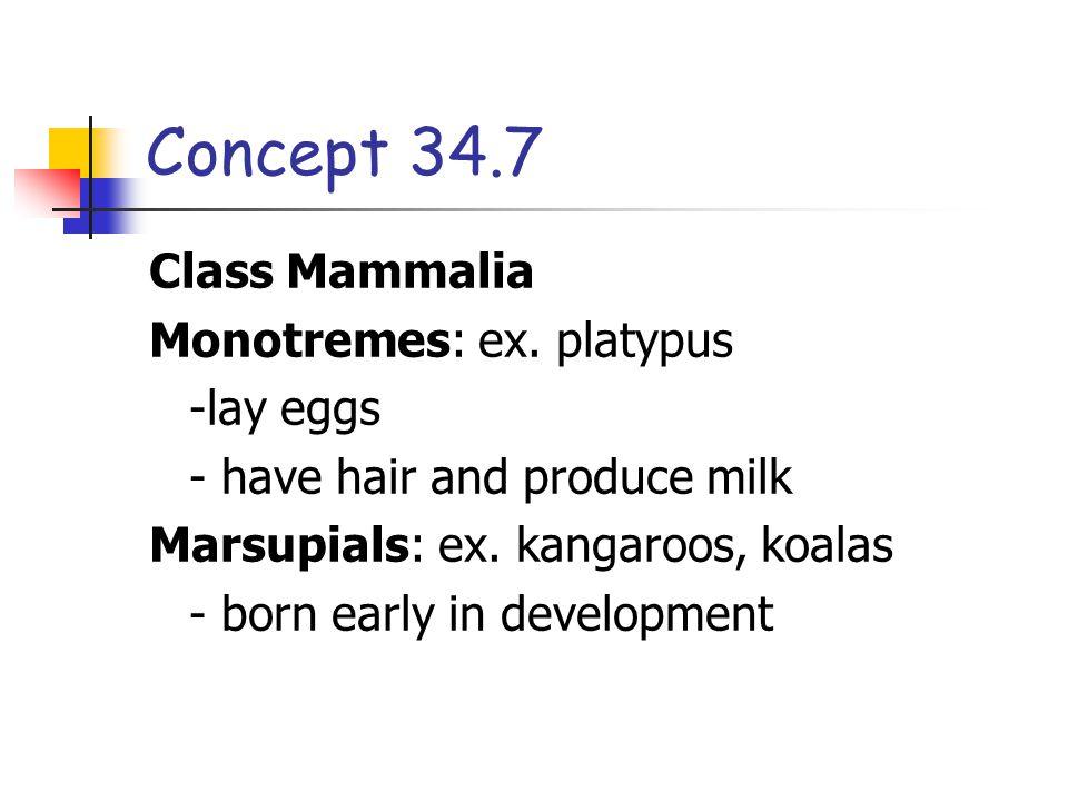 Concept 34.7 Class Mammalia Monotremes: ex. platypus -lay eggs - have hair and produce milk Marsupials: ex. kangaroos, koalas - born early in developm