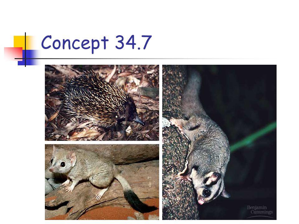 Concept 34.7