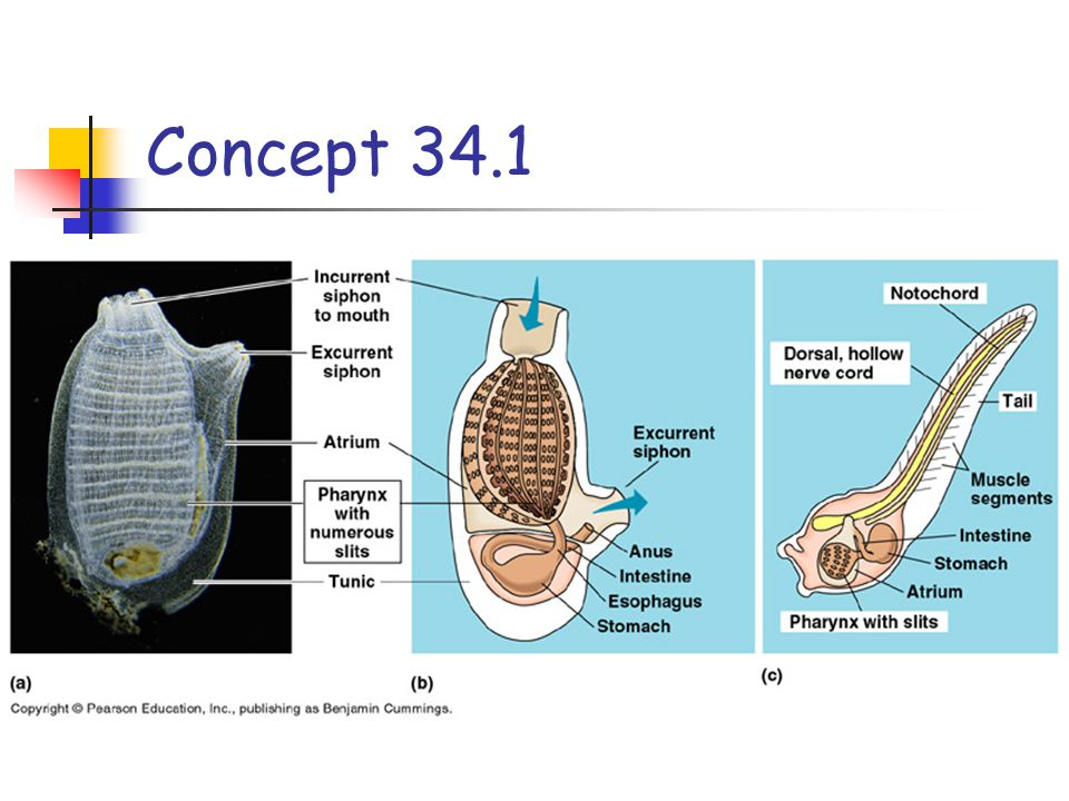 Concept 34.1