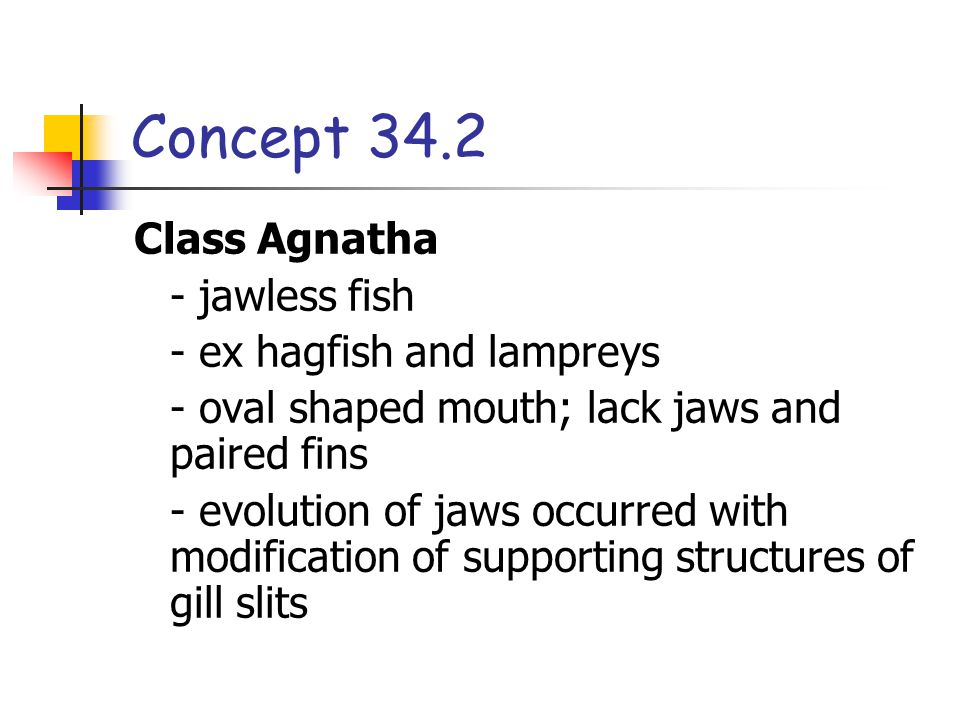Concept 34.2 Class Agnatha - jawless fish - ex hagfish and lampreys - oval shaped mouth; lack jaws and paired fins - evolution of jaws occurred with modification of supporting structures of gill slits
