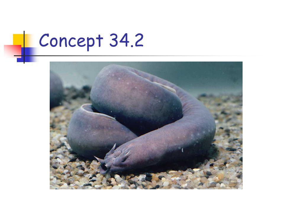 Concept 34.2