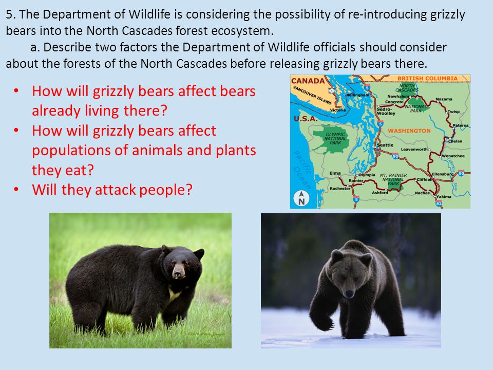 5. The Department of Wildlife is considering the possibility of re-introducing grizzly bears into the North Cascades forest ecosystem. a. Describe two