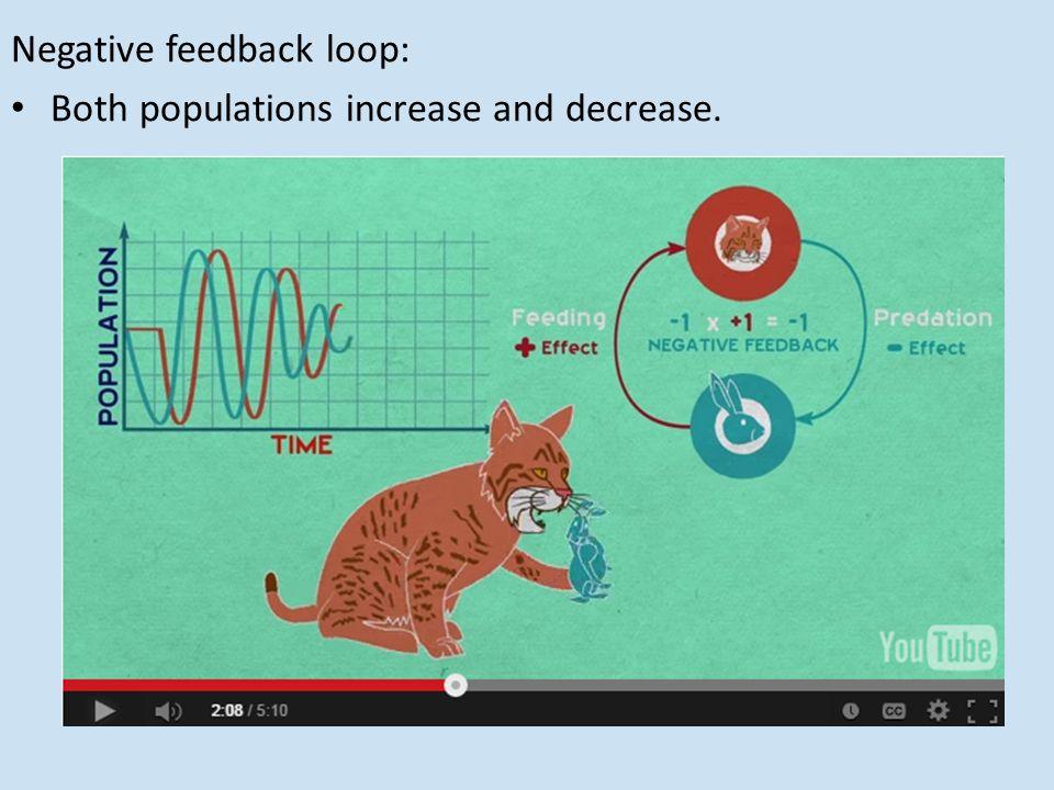 Negative feedback loop: Both populations increase and decrease.