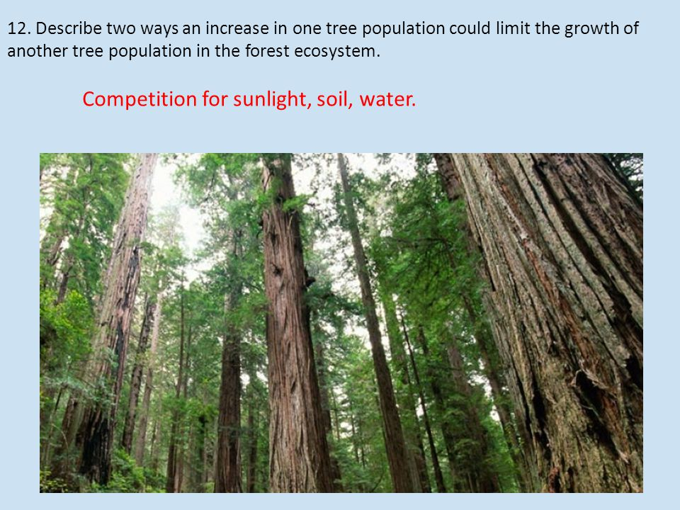 12. Describe two ways an increase in one tree population could limit the growth of another tree population in the forest ecosystem. Competition for su