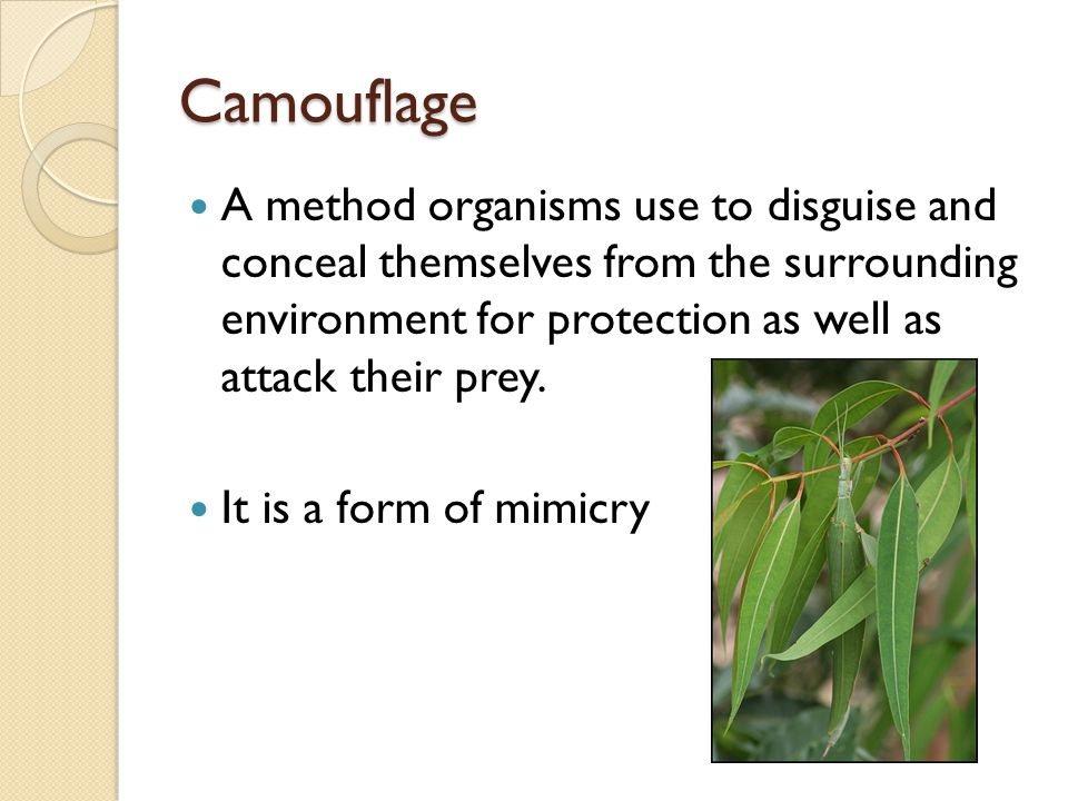 Camouflage A method organisms use to disguise and conceal themselves from the surrounding environment for protection as well as attack their prey.