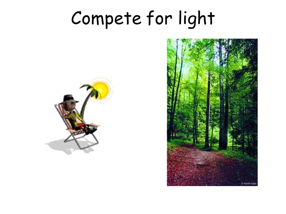 Compete for light