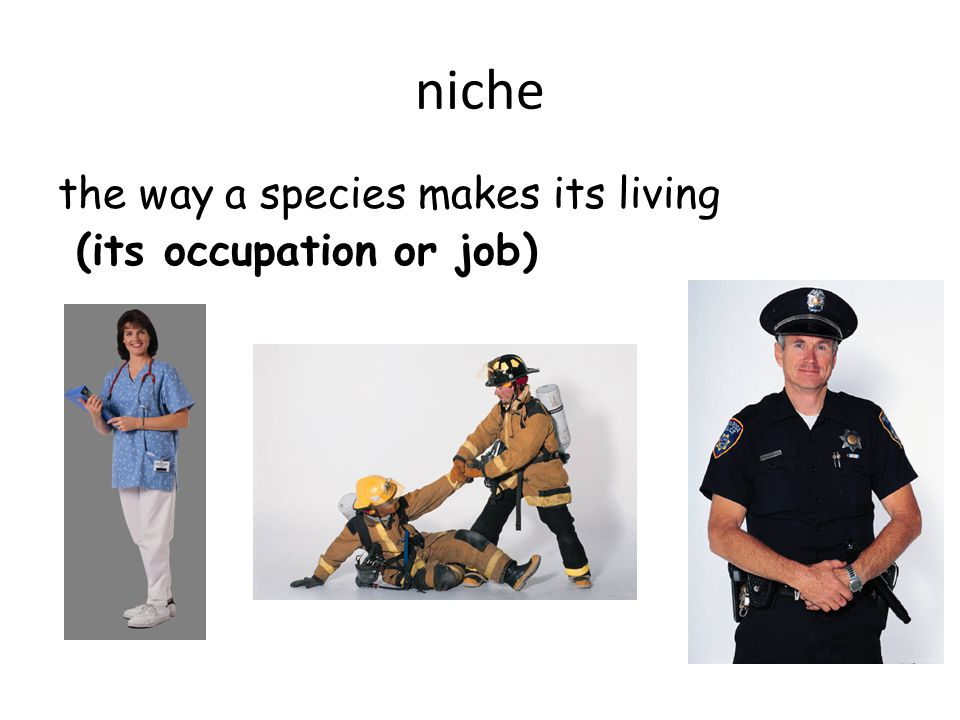 niche the way a species makes its living (its occupation or job)