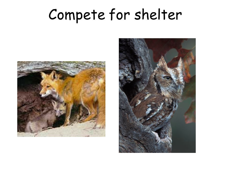 Compete for shelter