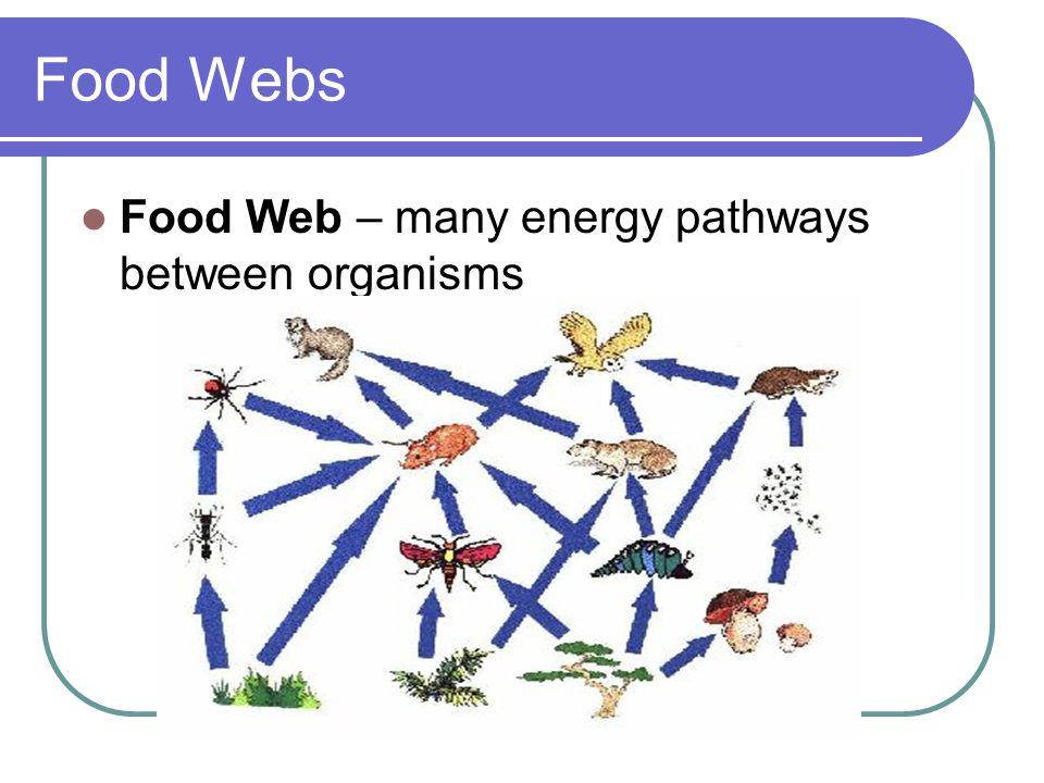 Food Webs Food Web – many energy pathways between organisms