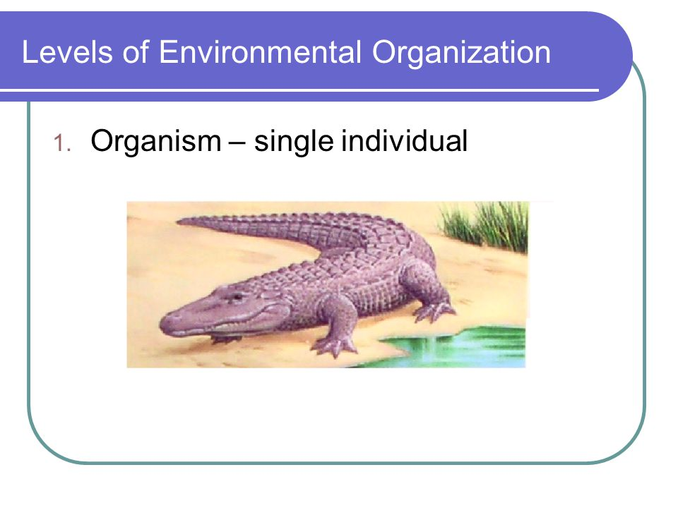 Levels of Environmental Organization 1. Organism – single individual