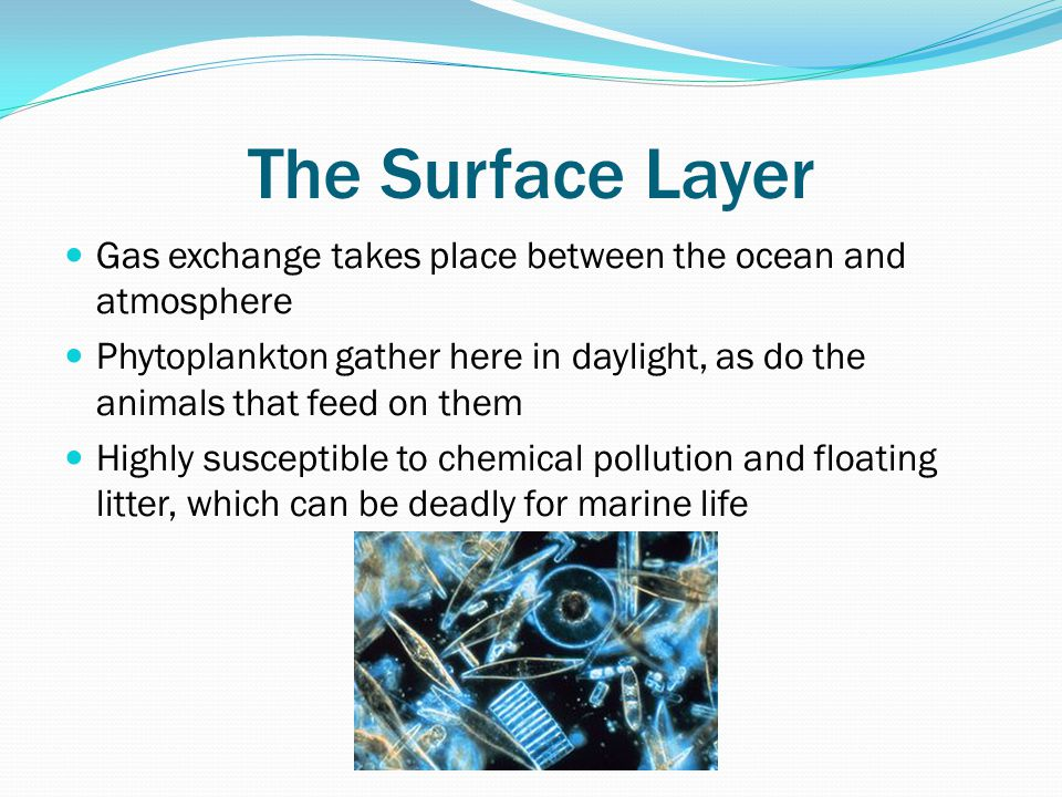 The Surface Layer Gas exchange takes place between the ocean and atmosphere Phytoplankton gather here in daylight, as do the animals that feed on them