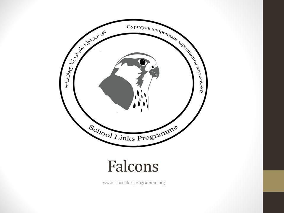 Falcons www.schoollinksprogramme.org