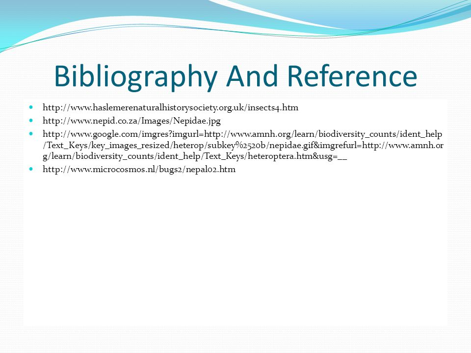 Bibliography And Reference http://www.haslemerenaturalhistorysociety.org.uk/insects4.htm http://www.nepid.co.za/Images/Nepidae.jpg http://www.google.c