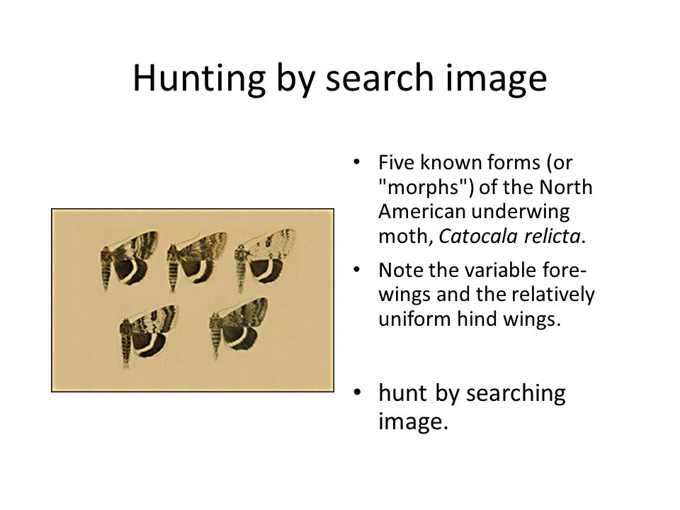 Hunting by search image Five known forms (or