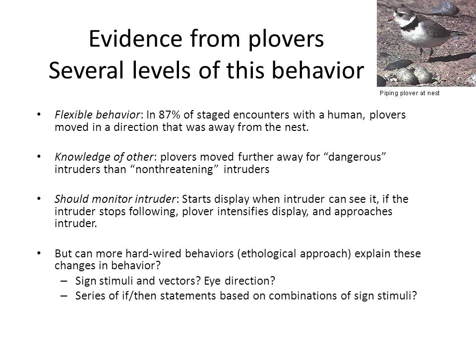 Evidence from plovers Several levels of this behavior Flexible behavior: In 87% of staged encounters with a human, plovers moved in a direction that was away from the nest.
