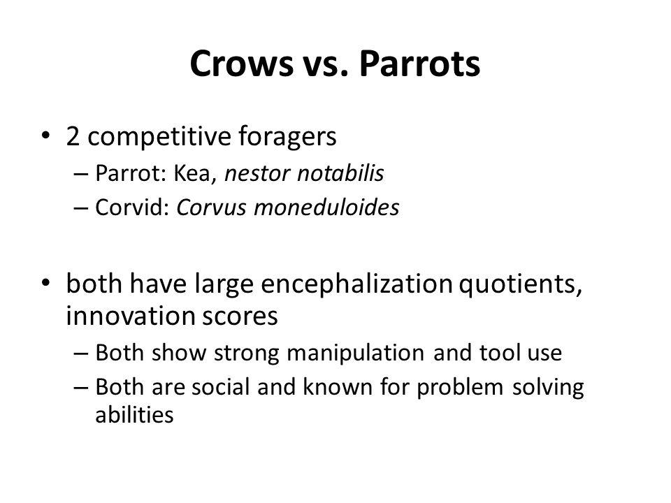 Crows vs. Parrots 2 competitive foragers – Parrot: Kea, nestor notabilis – Corvid: Corvus moneduloides both have large encephalization quotients, inno