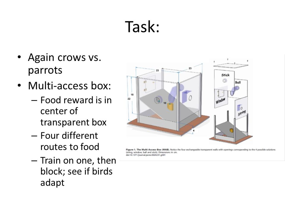 Task: Again crows vs. parrots Multi-access box: – Food reward is in center of transparent box – Four different routes to food – Train on one, then blo