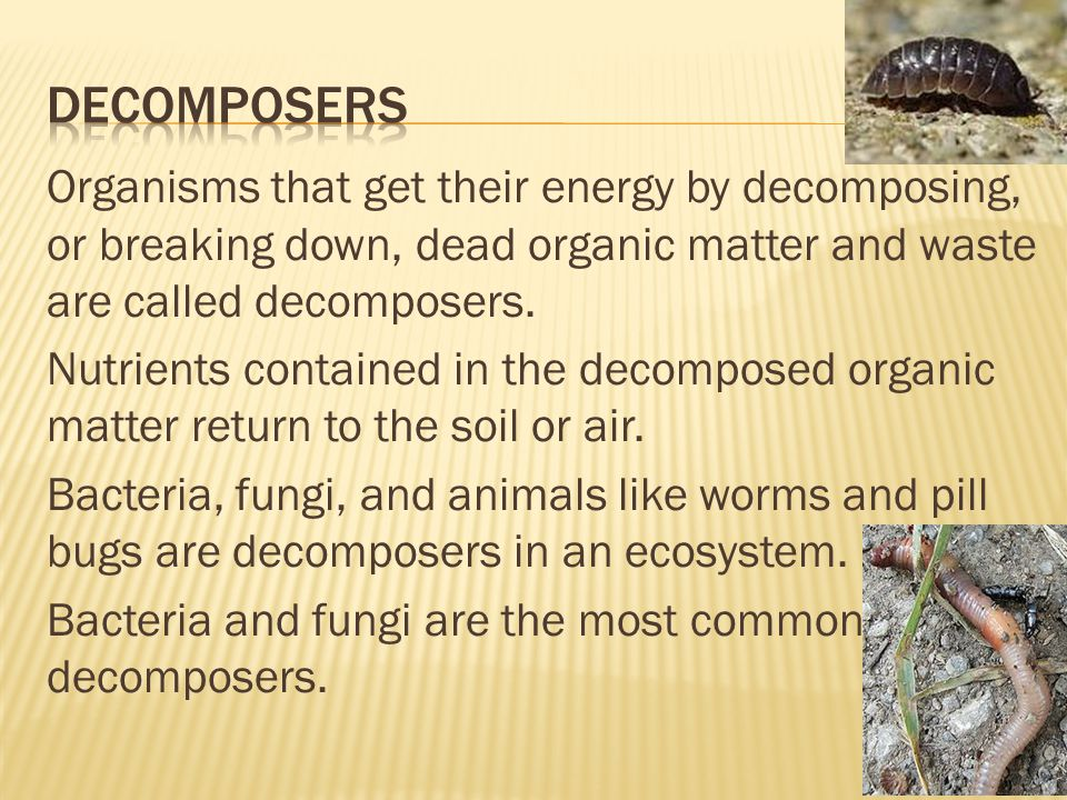 Organisms that get their energy by decomposing, or breaking down, dead organic matter and waste are called decomposers. Nutrients contained in the dec