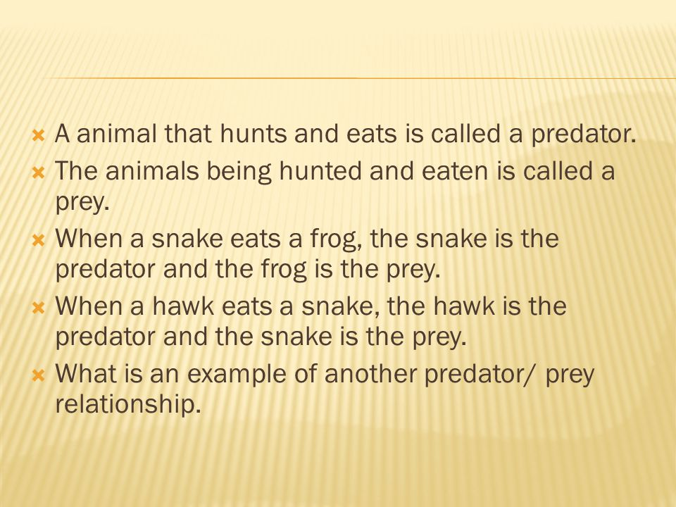  A animal that hunts and eats is called a predator.  The animals being hunted and eaten is called a prey.  When a snake eats a frog, the snake is t
