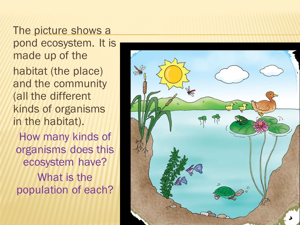 The picture shows a pond ecosystem. It is made up of the habitat (the place) and the community (all the different kinds of organisms in the habitat).