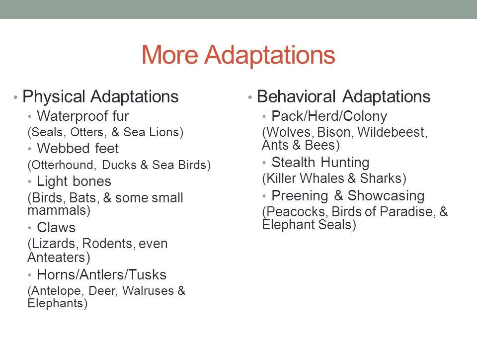 More Adaptations Physical Adaptations Waterproof fur (Seals, Otters, & Sea Lions) Webbed feet (Otterhound, Ducks & Sea Birds) Light bones (Birds, Bats
