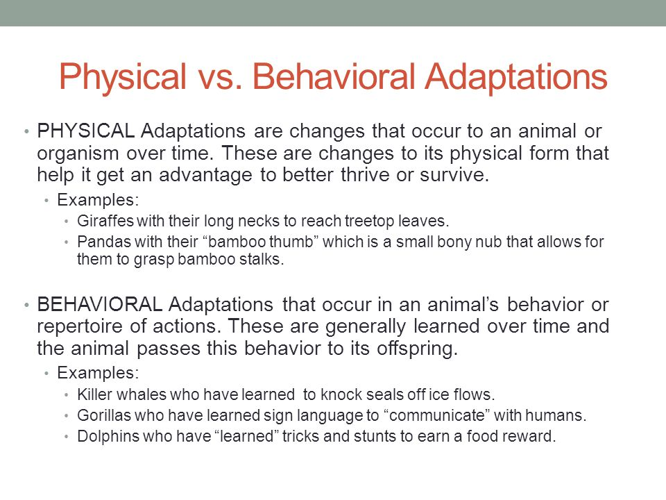 Physical vs. Behavioral Adaptations PHYSICAL Adaptations are changes that occur to an animal or organism over time. These are changes to its physical