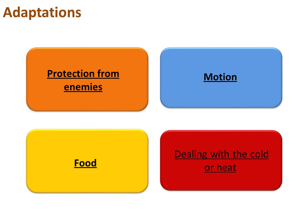 Adaptations Protection from enemies Motion Food Dealing with the cold or heat